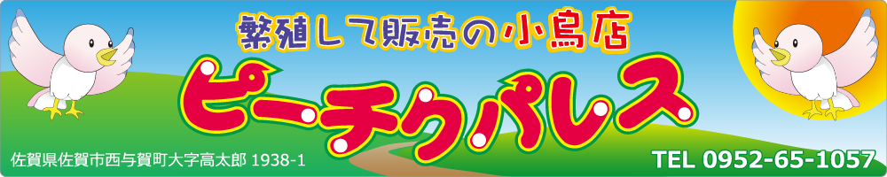 佐賀県の繁殖して販売する小鳥店 ピーチクパレス